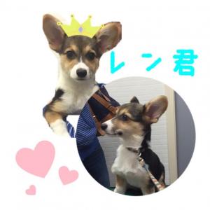 小俣レン2